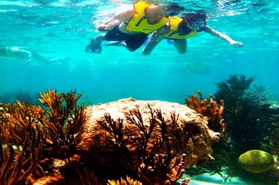 Cozumel Island: Snorkel at 3 Coral Reefs