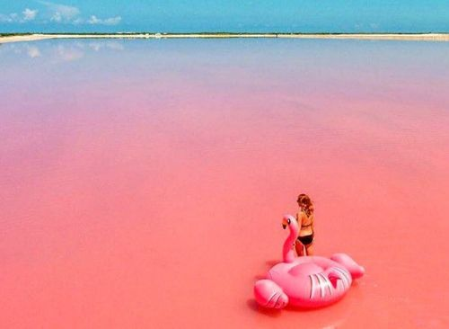 Las Coloradas | Río Lagartos desde Cancún (Económico)