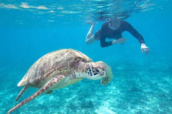 Tulum Cenote nado con Tortugas