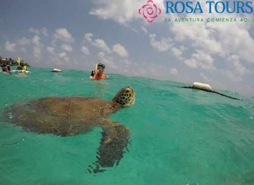 Akumal Nado con Tortugas y Cenote