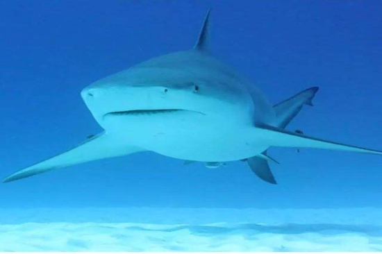 Adrenaline Diving with Bull Shark