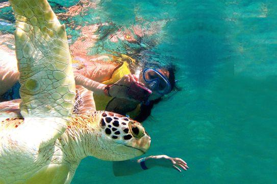 Cenote - Nado con Tortugas Express
