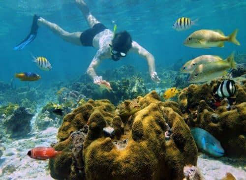 Arrecifes Colombia Palancar Snorkel