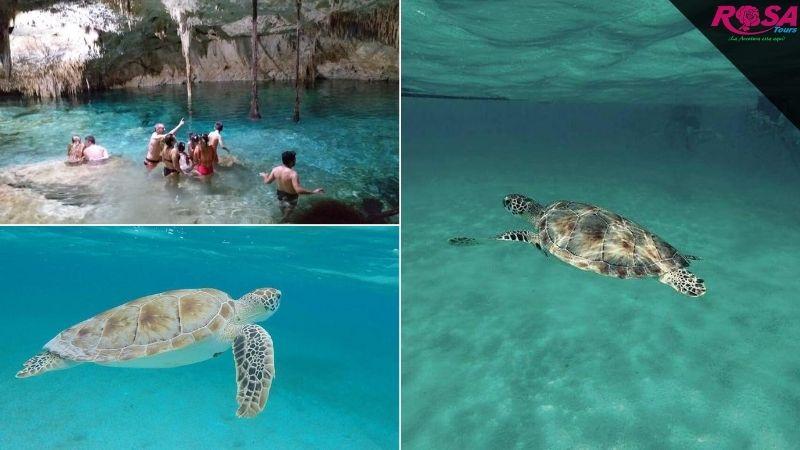 Tour Akumal Nado con Tortugas y Cenote Caverna