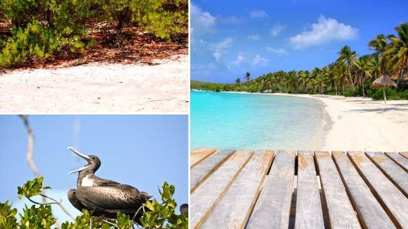 Tour Isla Contoy económico desde Playa del Carmen