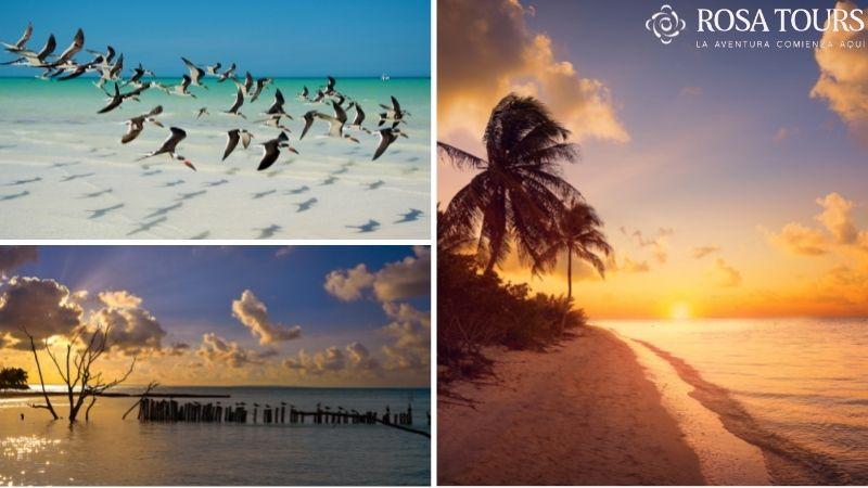 Tour Holbox desde Playa del Carmen y Riviera Maya