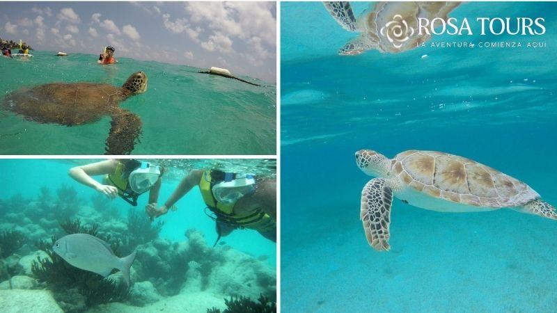 Tour Akumal Nado con Tortugas y Cenote