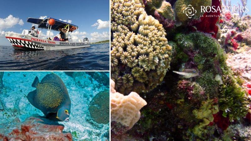 Tour Isla Cozumel: Snorkel Clásico 2 horas