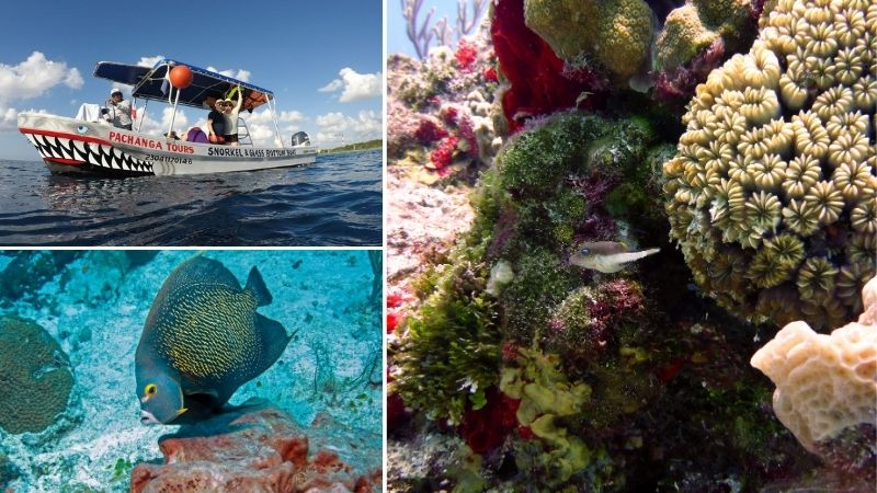 Tour Isla Cozumel: Snorkel en lancha fondo de cristal 2 horas