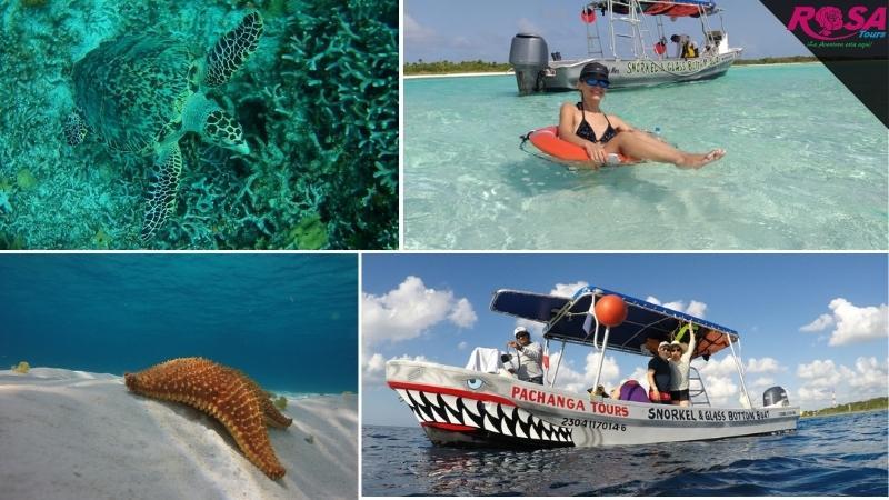 Isla Cozumel: Snorkel en lancha fondo de cristal 2 horas