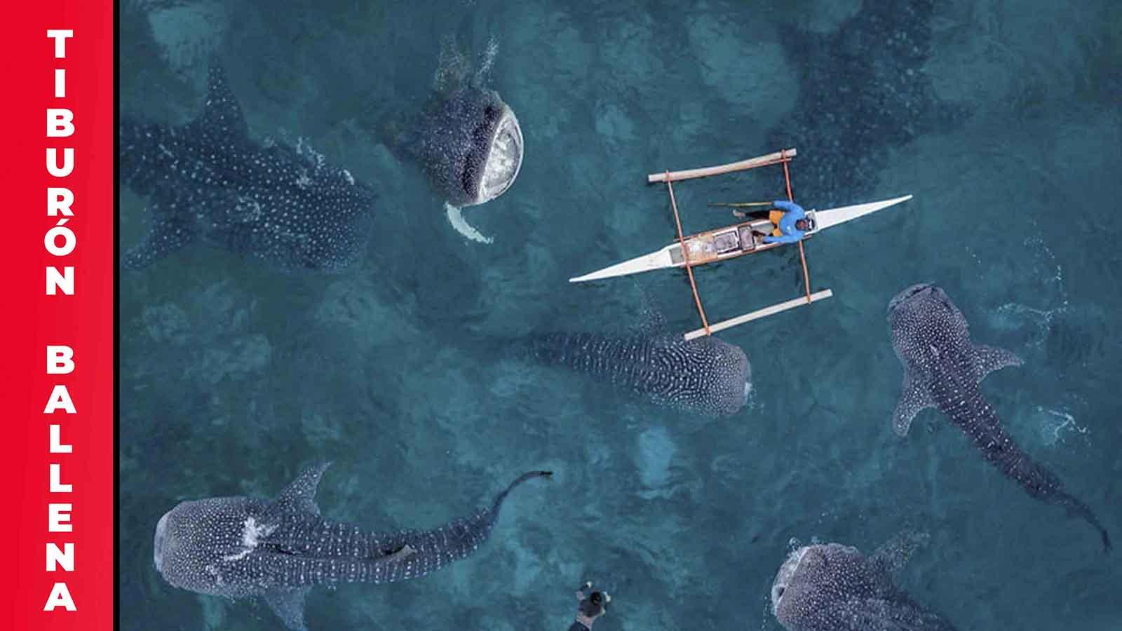 Nado con el Tiburón Ballena&IN